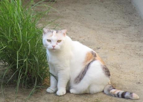 中宮寺の猫 1