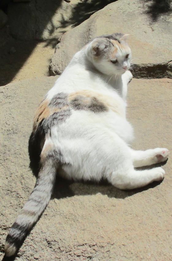 中宮寺の猫 2