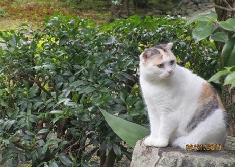 中宮寺の猫 4