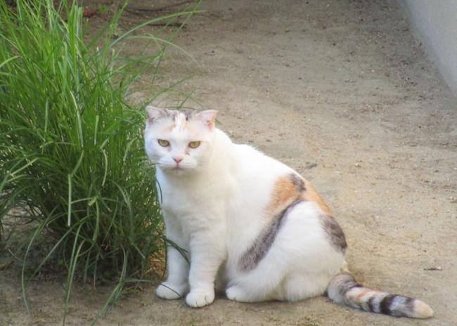 中宮寺の猫 6
